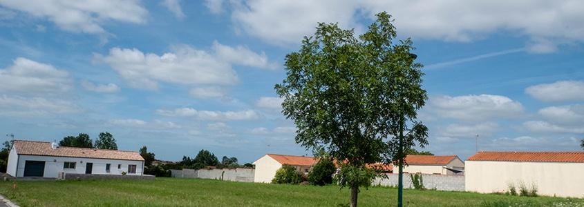 Petit terrain en campagne avec un arbre