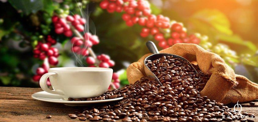 Histoire du café : La consommation de café selon les pays