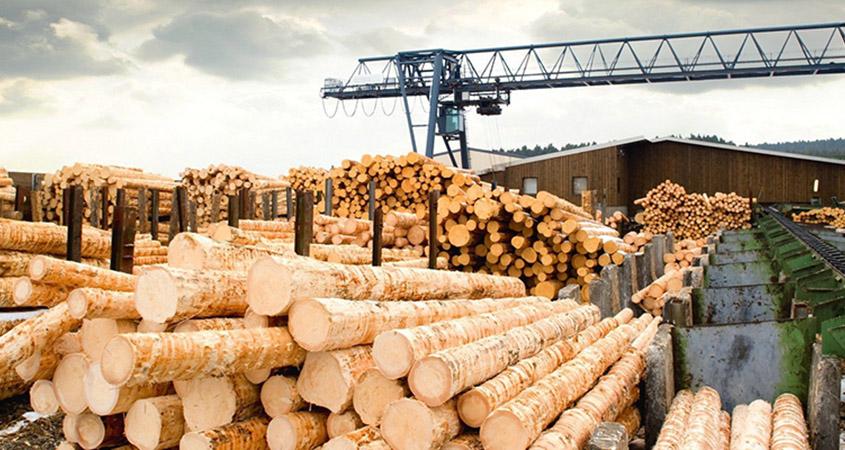 Filière Bois : pourquoi la France exporte autant… au détriment du Bâtiment ?