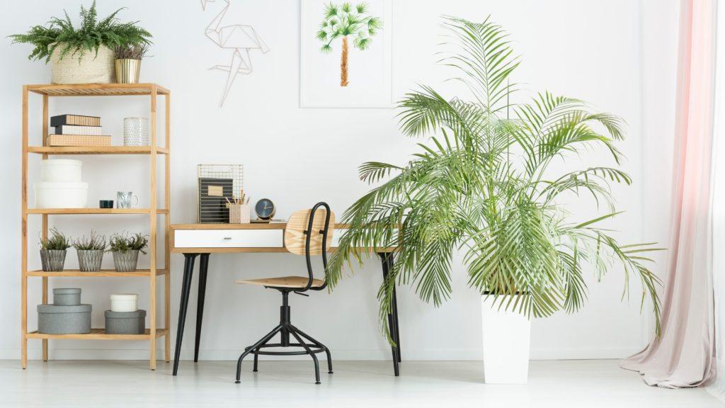 Quelles plantes utiliser pour dépolluer votre bureau ?